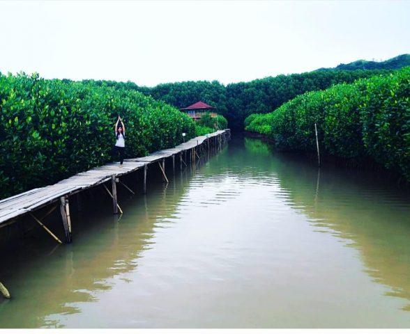 Hutan Mangrove Congot Hadirkan Sesuatu Yang Wow Kala Senja