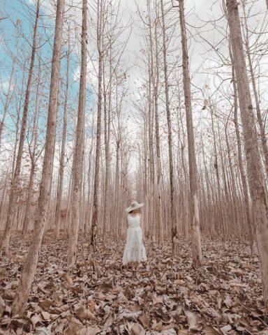 Hutan Kering dan Taman Bunga Celosia, Objek Wisata Kekinian di Gunungkidul