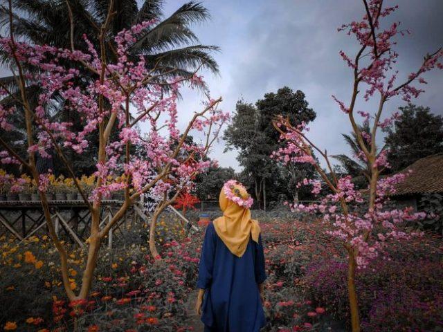 kebun bunga cokro kembang